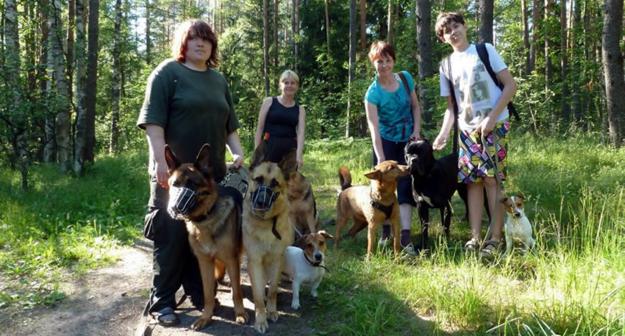 дрессировочные центры для собак в спб фото